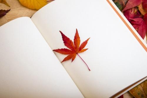 京东发布区块链白皮书,区块链应用遍地开花