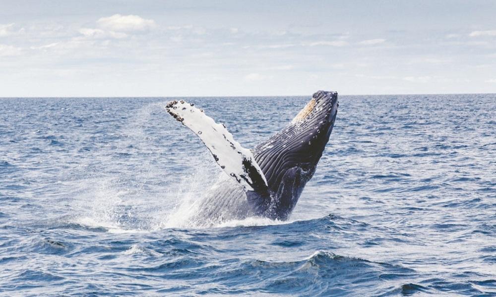 加密货币巨鲸深度研究:操纵市场是误解,还有人在做慈善